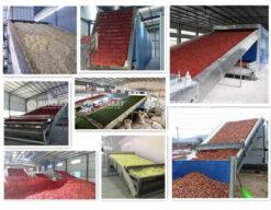 Máy sấy băng tải chuyên sấy nông sản