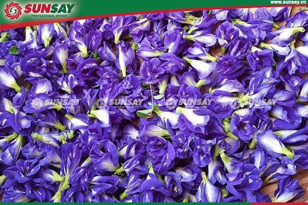 Hoa đậu biếc với nhiều công dụng tốt cho sức khoẻ