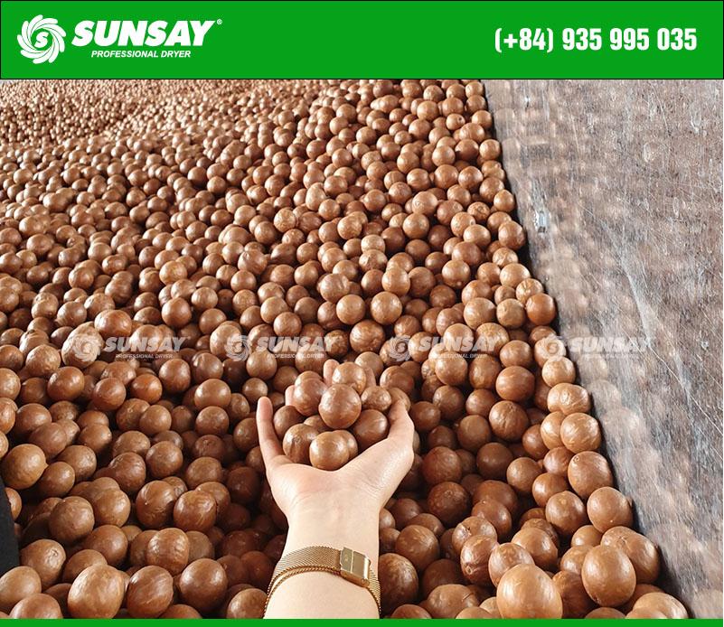 Quy trình chế biến hạt mắc ca sau thu hoạch